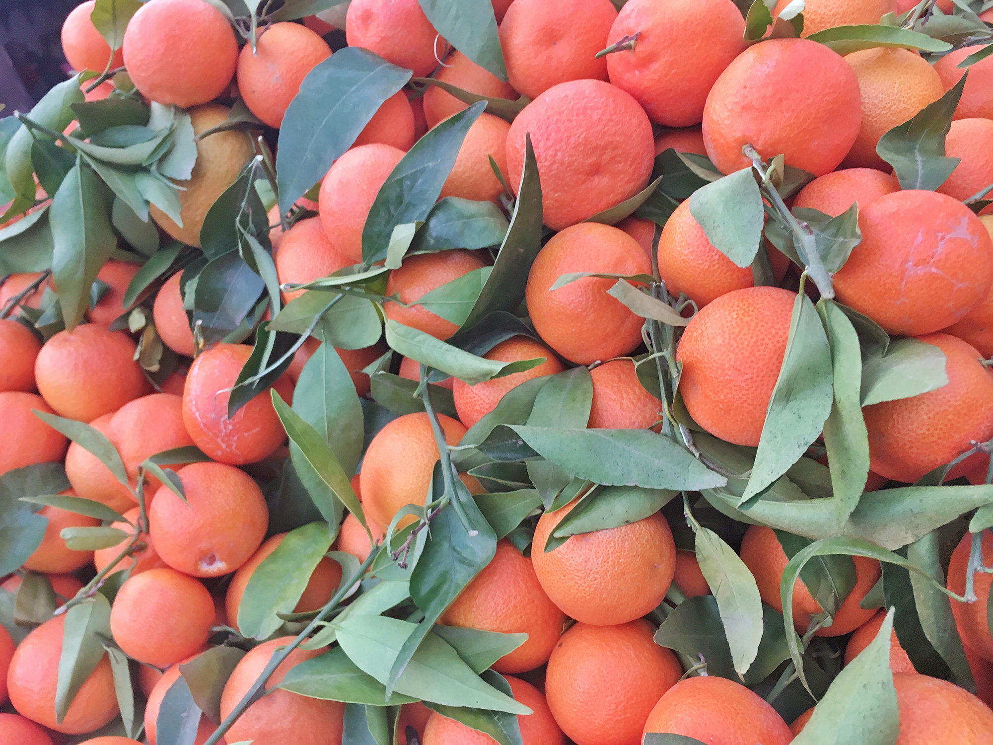 Dishes To Try In Morocco - Orange Juice