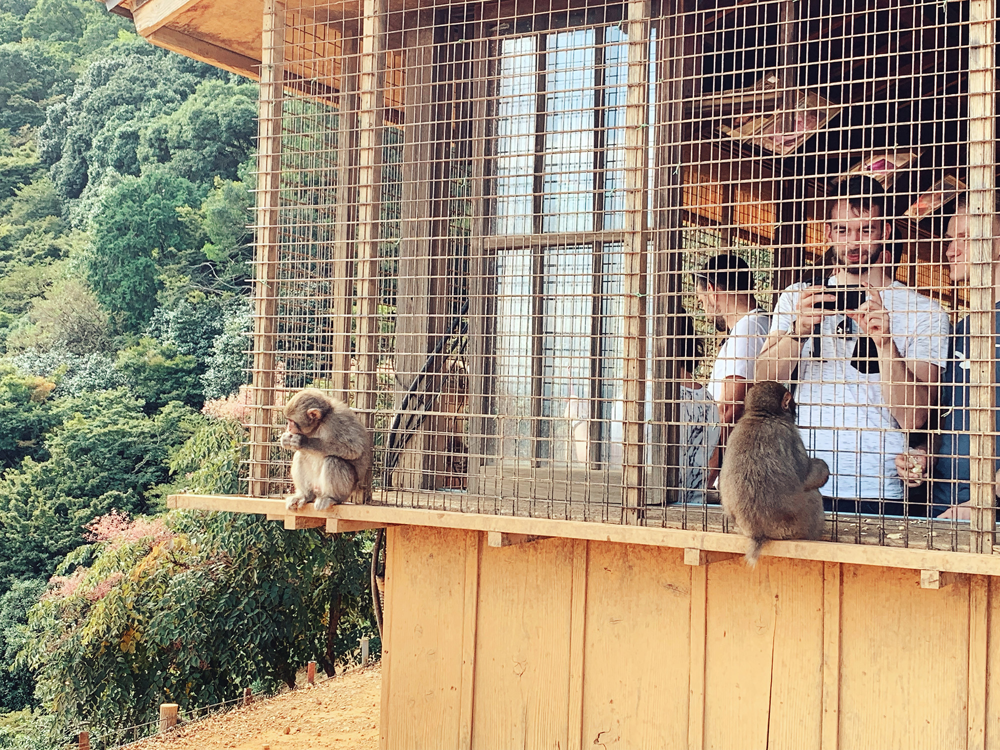 Kyoto Guide - Monkey Park