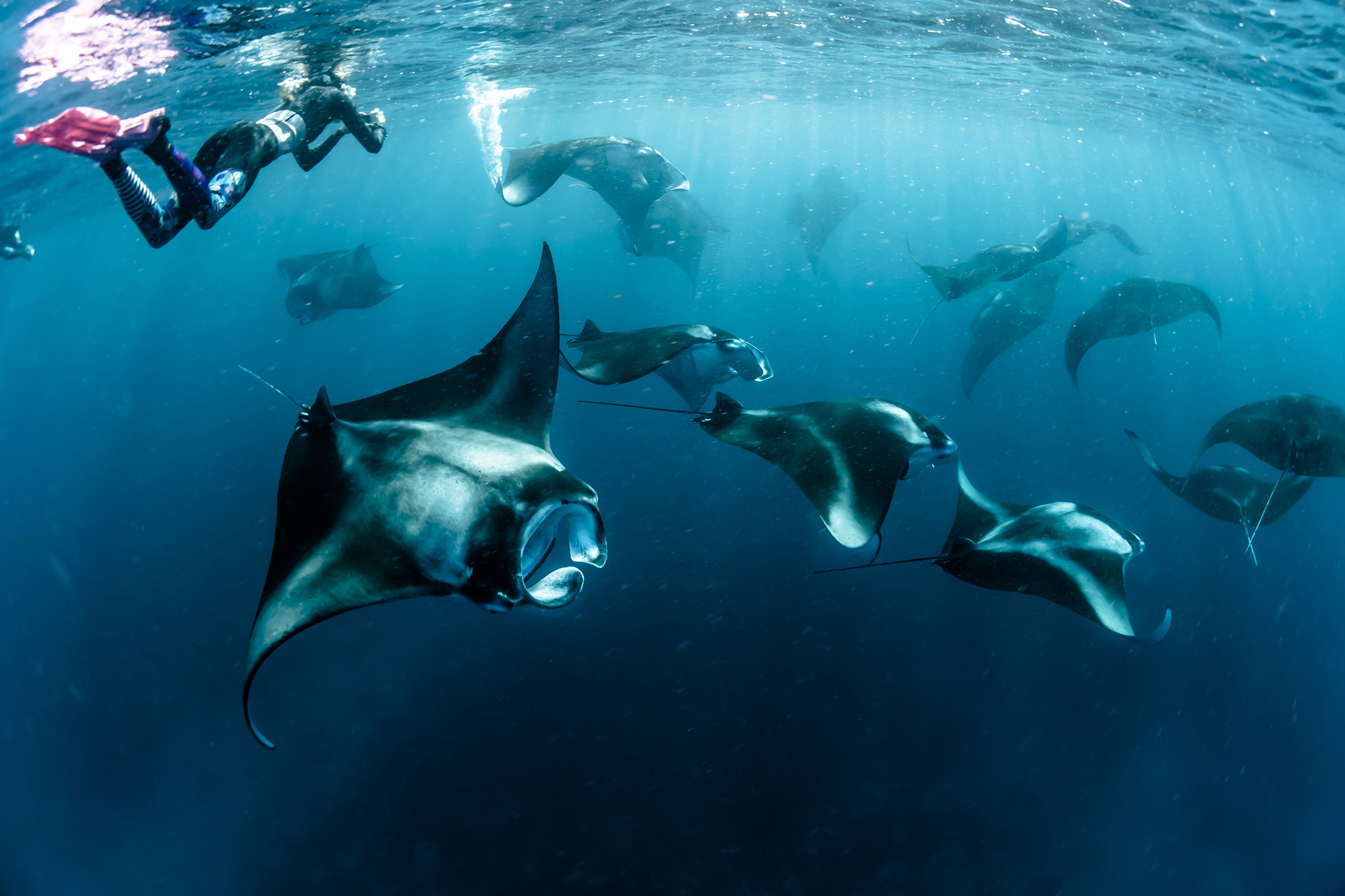 snorkelling with manta rays in Hawaii