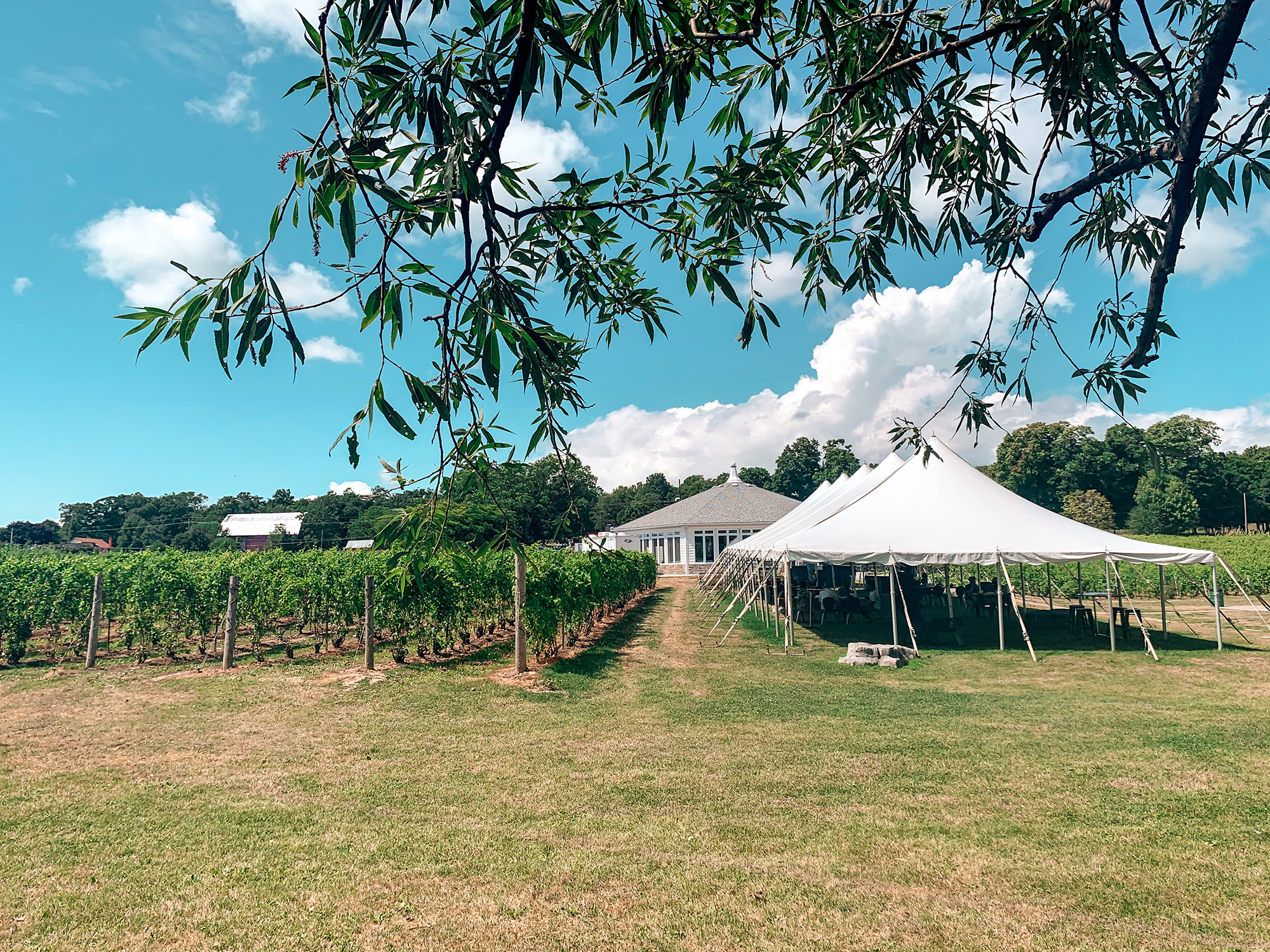 Prince Edward County wineries - Waupoos Winery