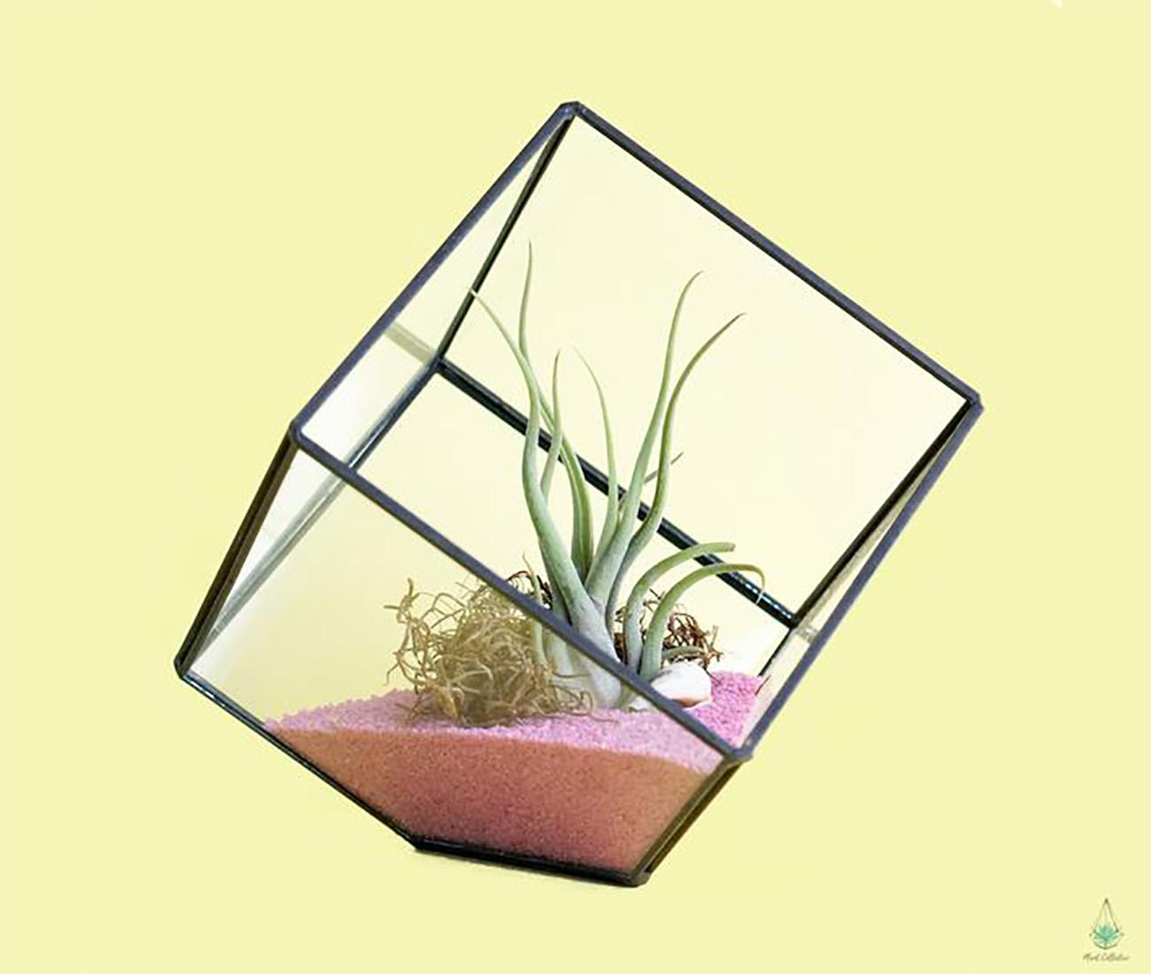 Toronto Gift Ideas - Plant Collective